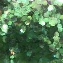Bolsa de Hexágonos Verde Nail Art
